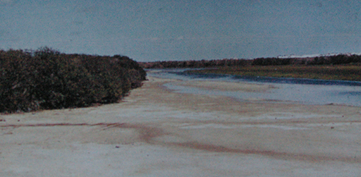 The Port River bordered by mangrove and samphire near West Lakes, 1960 (D. N. Kraehenbuehl)