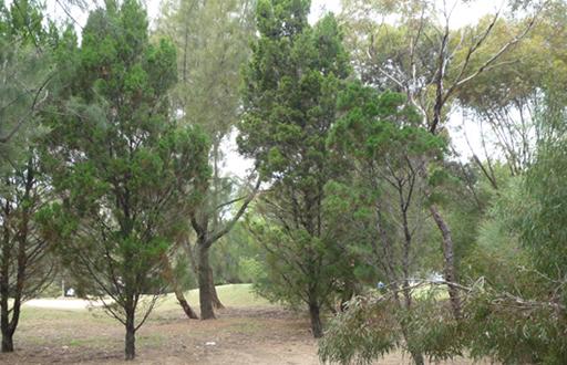 Narno Native Pine, Malone & Telfer
