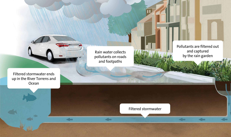 Rain garden infographic