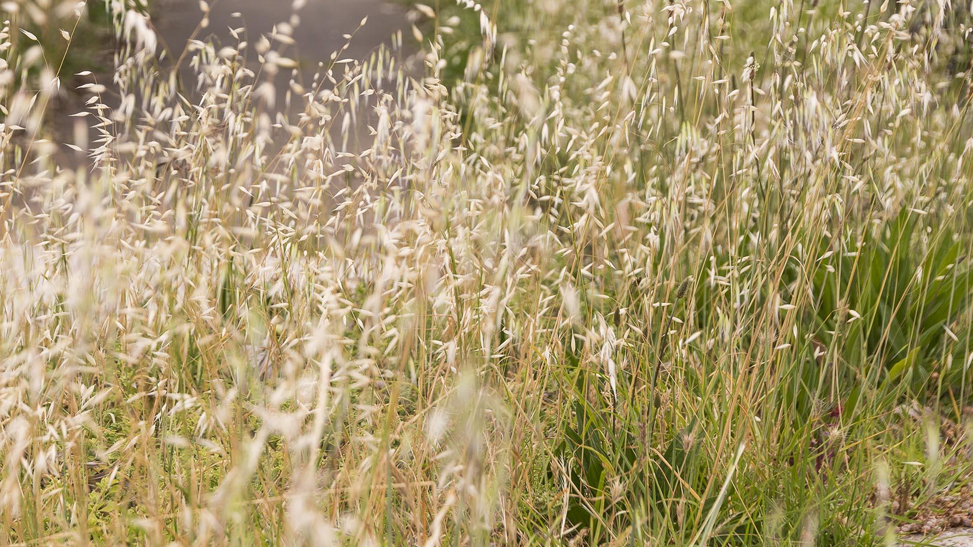 Overgrown vegetation